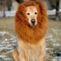 Festival Party Pet Costume - Lion Mane Wig for Large Dogs Brown