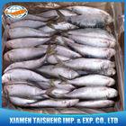 Frozen Sardine Fish Price