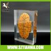 Plexiglass shaped square display insert stone paper weight