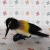 Colourful fashion wholesale cute cheap lancashire canary birds for sale