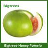 import fruit fresh