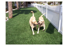 High end natural grass look artificial turf