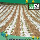 Bio agricultural plastic mulch,plastic film manufacturers