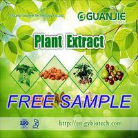 GMP ISO Approved 100% Natural Terpen Lactones Ginkgo biloba Supplier