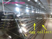 Bıldırcın kafesi otomatikiçme sistemi/bıldırcın yetiştiriciliği kafesleri( Lydia: 0086 15965977837)