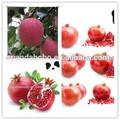 2014 de manzana fresca huaniu mismo como washington apple con el mejor precio