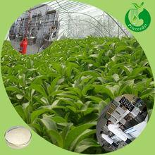 Pure stevia leaf/stevioside, stevia sugar/stevia extract