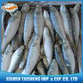 sardina congelada la luz capturado peces precio sardinops sagax