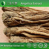 Prime Quality Angelica sinensis Extract Powder with Low Price