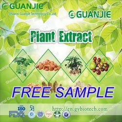 ISO Manufacturer Wholesale Garlic Price