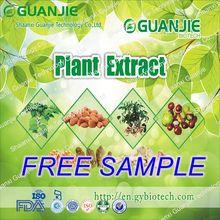 High Quality Organic Garlic
