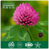 100% natural red clover extract with 40% Isoflavones by HPLC for women health