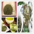 Une casserole- au thé vert à la saveur rafraîchissante vapeur de thé vert sencha biologique pure de haut grade standard de l'ue sencha chinois