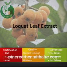loquat leaf/loquat leaf extract/loquat leaf tea