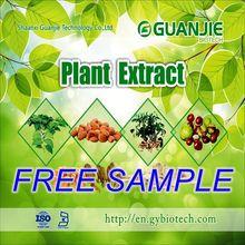 ISO Manufacturer Wholesale Phyllanthus niruri Price