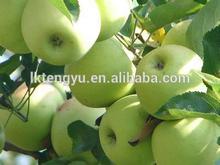 Golden delicious apple /Green apple