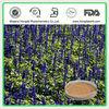 Pure Clary Sage extract (Salvia sclarea)