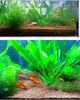 seaweed fertilizer aquarium ornaments red clay pebbles for sale