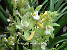 China fabricar produto da patente vasos de flores argila fertilizantes para orquídea