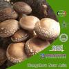 100% Best Quality Natural Shiitake Mushroom Extract Beta-Glucan
