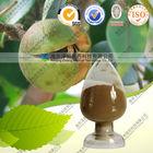 Natural Tea seed extract powder saponin 95% 98% HPLC