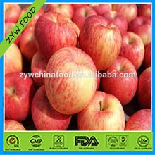 Fresh Apple / Red Onion / Chinese Fuji Apple
