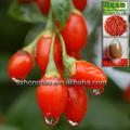 Bacca di goji frutta fresca con il 40% polisaccaride polvere