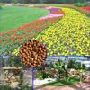 Miniature garden dedicated organic fertilizer good quality clay soil