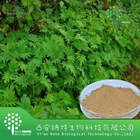 Nettle Extract Urtica Dioica Sterols 1%