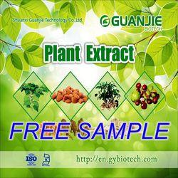 High Quality Free Sample Natural Vital wheat gluten