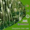 Black Cohosh Extract/Triterpene Glycosides