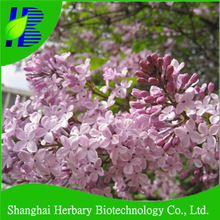 2014 Professional flower seeds clove seeds for planting