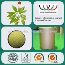 Free Sample for High Quality Health Herb Medicine / 100% Natural Panax Ginseng Root Extract
