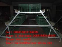 Taiyu long life bird cage chicken wire mesh 96 birds capacity