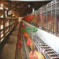 Buen precio de equipos de aves de corral para pollos de engorde/jaula de pollos de engorde