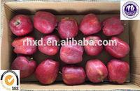 red delicious Washington apple price