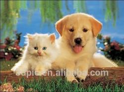 3d poster lenticular print hologram picture dog&cat advertisement hot-sale customized PET/PP animal publication