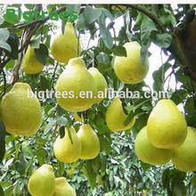 Tropical imprt fruit