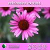 100% pure 10:1 echinacea purpurea extract