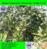 2014 new crop chinese mandarin orange citrus fruit
