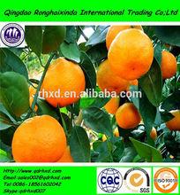2014 new crop canned mandarin orange