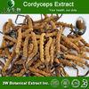 HALAL ,KOSHER- Ophiocordyceps sinensis extract,Yarsagumba Extract 10%~50% Polyssacharides UV