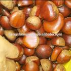 High Quality Fresh Chestnuts