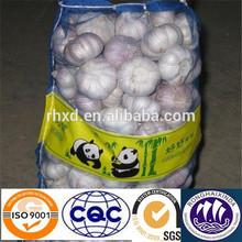 fresh white garlic plantation exporter