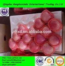 2014 new crop importer fresh fruits