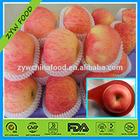 New Apple Season China Red Apple / Fresh Fuji Apple / Red Apple