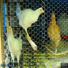 Chicken Galvanized Hexagonal Wire Mehs For Animals