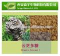 Ganoderma lucidum, maca wurzel pulver, kostenlose proben maca extrakt,