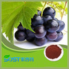 high quality pure natural grape seed extract