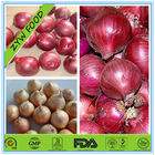 price of onion for Malaysia Appreciated by Importers